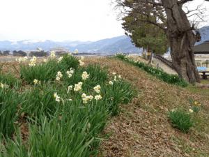 水神公園・附近(西大井):1月上旬撮影
